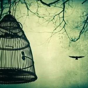 pp_bird