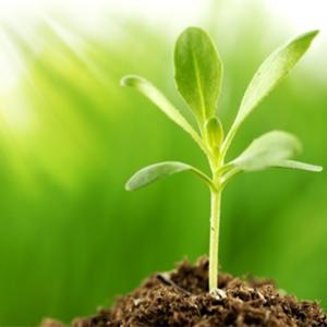 pp_plant